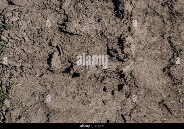 Mud Tire Tracks Tyre Tracks Mud Stock ...
