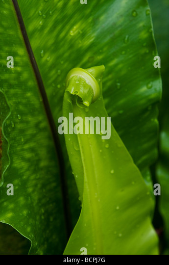 Curled Up Flower Stock Photos Amp Curled Up Flower Stock Images Alamy