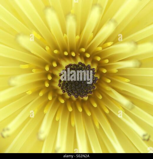 Yellow Stamen Stock Photos Amp Yellow Stamen Stock Images