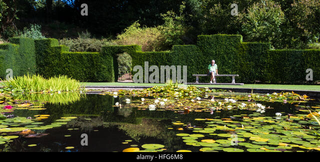 Natural garden pond hedge stock photos natural garden for Ornamental fish garden ponds