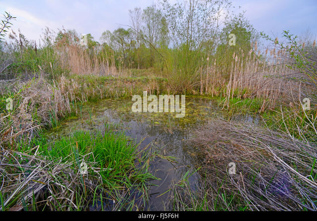 Artificial wetland stock photos artificial wetland stock for Artificial pond