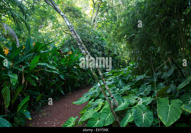 Bawas stock photos bawas stock images alamy for Sri lankan landscaping plants