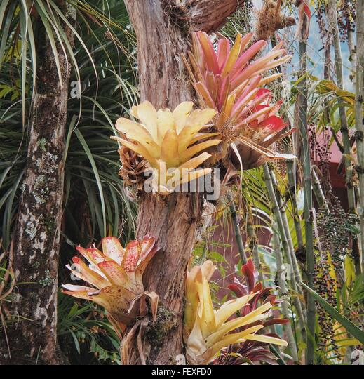 Bamboo trunk stock photos bamboo trunk stock images alamy - Flowers that grow on tree trunks ...