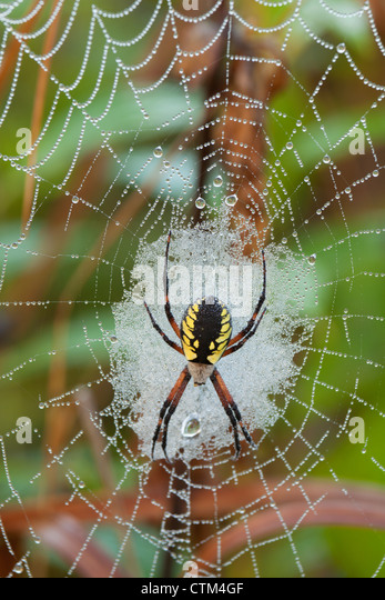 writing spiders stock photos writing