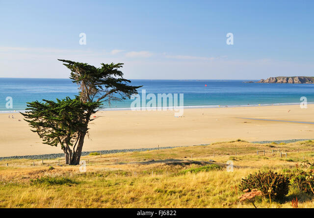 pine bush latin singles Common name: ponderosa pine, yellow pine: latin name: pinus ponderosa: family: pinaceae : sunset zones / usda zones: 1-10, 14-21, h1 / type / form: tree / large.