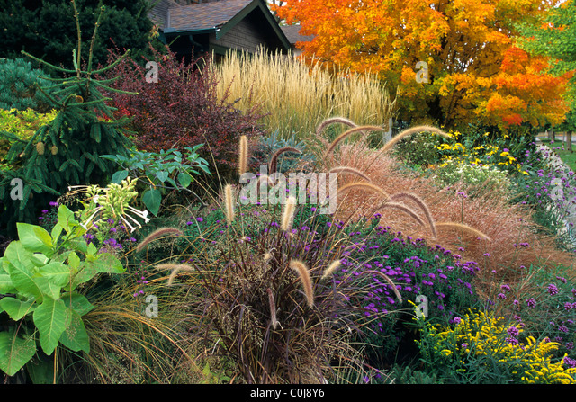 Ornamental grasses stock photos ornamental grasses stock for Purple grasses for landscaping