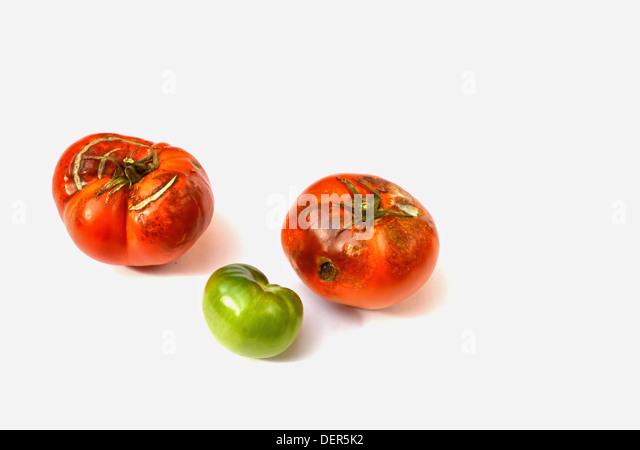 rotten tomatoes stock photos amp rotten tomatoes stock