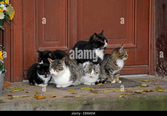 cats by door