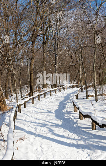 An empty trail curves into the distance in a scenic morning view of the woods of Central Park after a snow storm - Stock Image