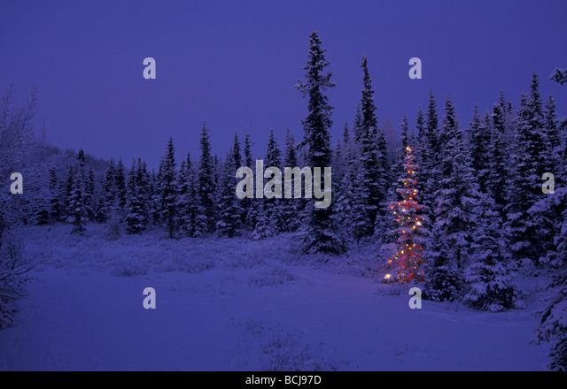 Lighted christmas trees in forest bing images