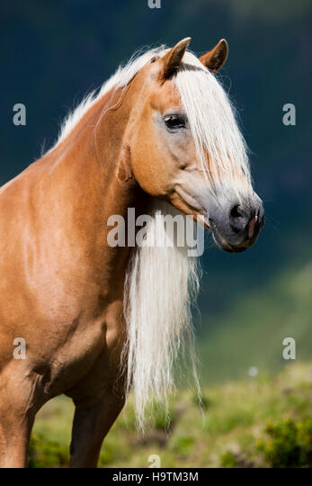 long manes stock photos - photo #9