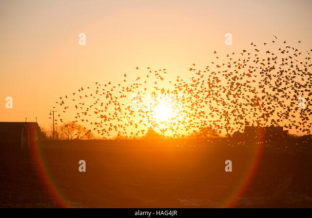 Photo Collection Early Morning Birds Nice