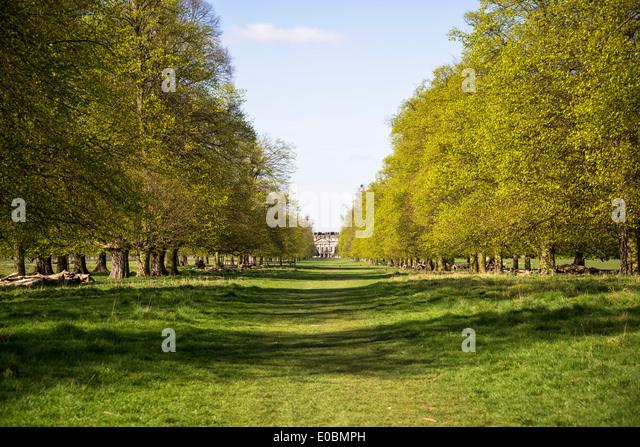 Avenue Of Beech Trees Leading To Hampton Court Palace Home Park Surrey England