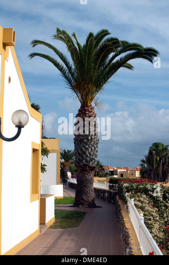 Seductive Fuerteventura Canary Islands Caleta De Stock Photos  With Fair Palm Tree Caleta De Fuste Fuerteventura Canary Islands  Stock Image With Awesome Garden Museum Wedding Also Best Online Garden Centre In Addition Grey Gardens Trailer And Cast Iron Garden Chairs As Well As The Fountain Garden Dorking Additionally Rustic Garden Furniture From Alamycom With   Awesome Fuerteventura Canary Islands Caleta De Stock Photos  With Seductive Cast Iron Garden Chairs As Well As The Fountain Garden Dorking Additionally Rustic Garden Furniture And Fair Palm Tree Caleta De Fuste Fuerteventura Canary Islands  Stock Image Via Alamycom