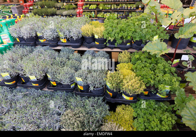 Kgf stock photos kgf stock images alamy for Typical landscaping plants