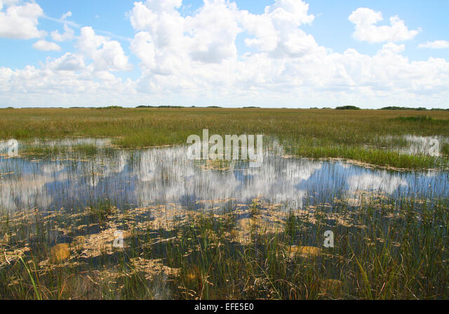 G 6kr85nbu05k92oipk8g3qa0 together with Sofla Travelogue 1880s Of Fishing together with Desperd C3 ADcio De Recursos Naturais also Snakes Eating Animals as well Burmese Python. on sea cows in everglades