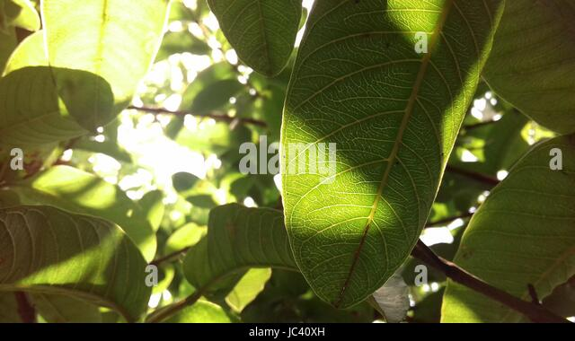 Clicked Stock Photos Amp Clicked Stock Images Alamy