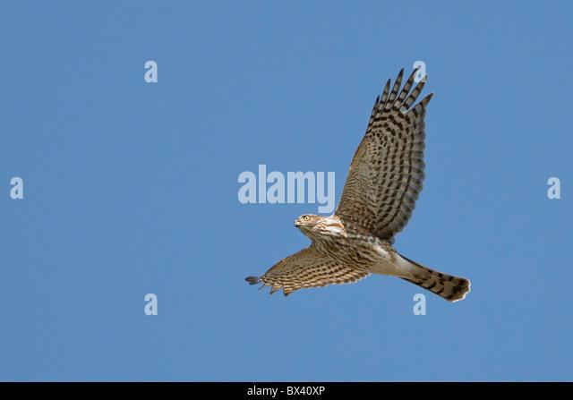 bird migration stock photos amp bird migration stock images