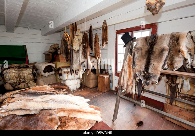 Animal Fur Found In The Storehouse Building At Fort Langley