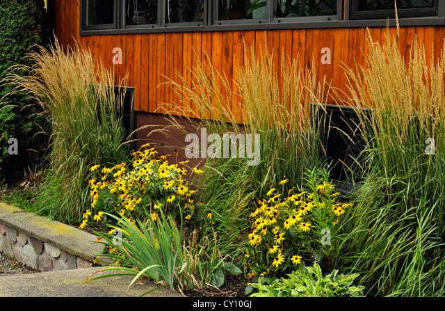 Tall Grasses Garden Stock Photos Tall Grasses Garden