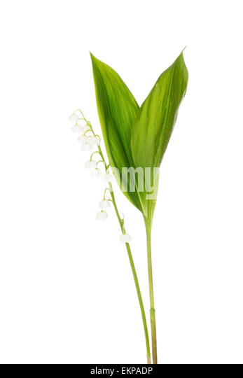 MayflowerCut Out Stock Images