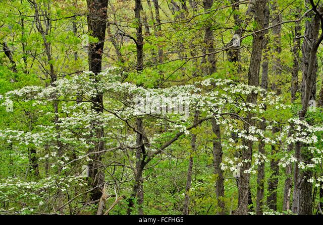 Hardwood Forest Stock Photos Amp Hardwood Forest Stock