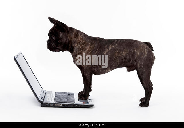 bulldog school stock photos bulldog school stock images. Black Bedroom Furniture Sets. Home Design Ideas