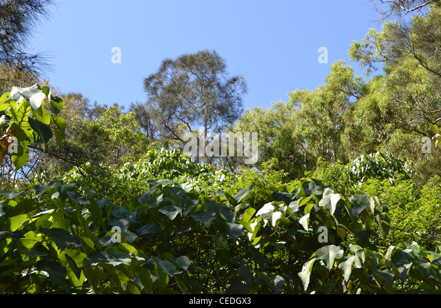 treetop canopy - Stock Image & Treetop Canopy Stock Photos u0026 Treetop Canopy Stock Images - Alamy