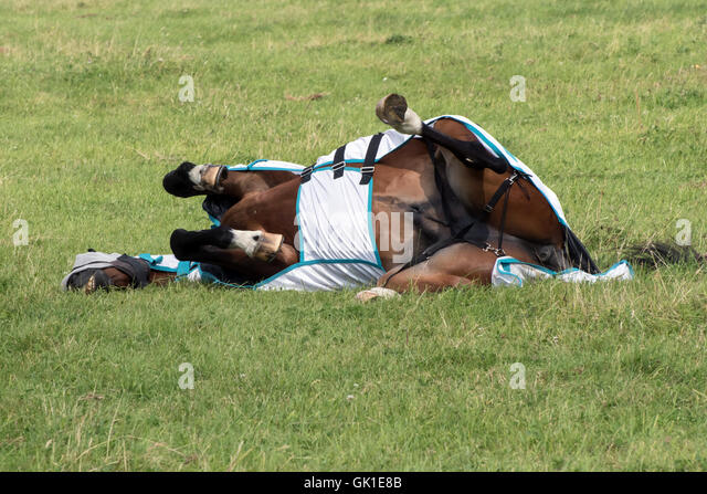 Horse rolling stock photos images