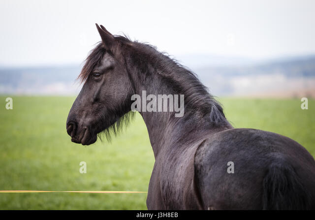 long manes stock photos - photo #22