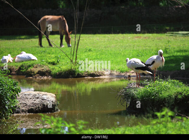 Horse Mating Stock Photos & Horse Mating Stock Images - Alamy
