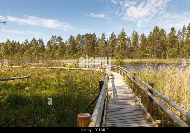 Wood Plank Walkway : Plank walkway stock photos images
