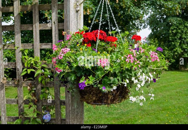 Municipal Hanging Flower Baskets : Annual annuals flowers garden stock photos