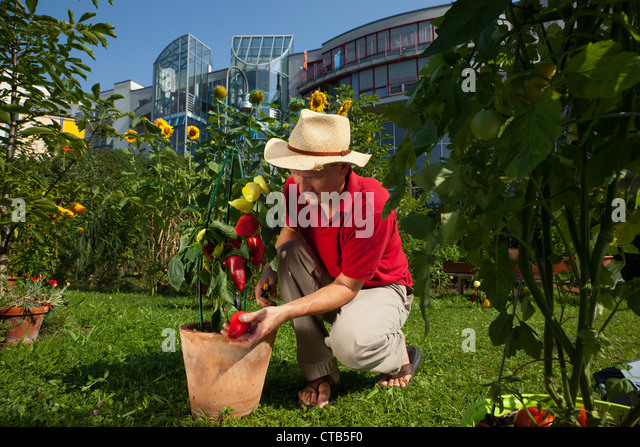 urban gardening vegetables stock photos urban gardening vegetables stock images alamy. Black Bedroom Furniture Sets. Home Design Ideas