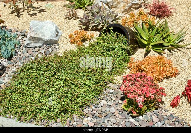 drought tolerant garden stock photos drought tolerant