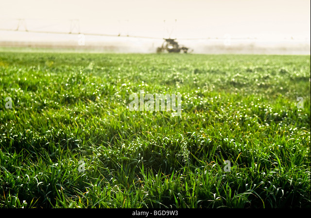 Irrigation Agricultural Stock Photos & Irrigation ...