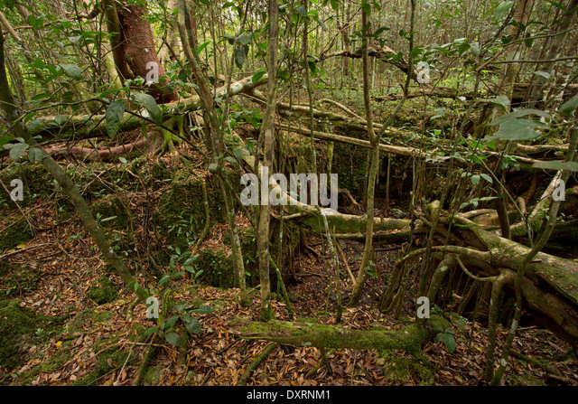 sinkhole or solution hole in miami oolite limestone bedrock at castellow hammock reserve miami limestone bedrock stock photos  u0026 limestone bedrock stock images      rh   alamy