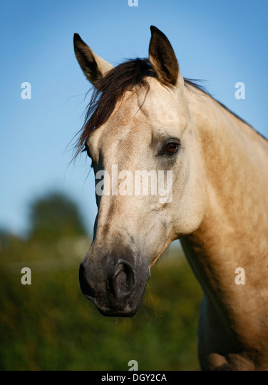 quarter horse head pictures - photo #36