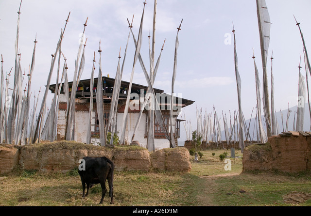 Cow Yard Stock Photos & Cow Yard Stock Images - Alamy