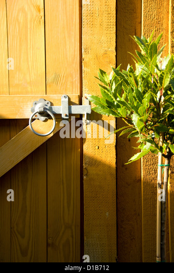 Garden Gate, Latch And Bay Tree   Stock Image