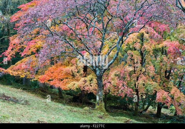 Foliage autumn scotland stock photos foliage autumn for Garden trees scotland