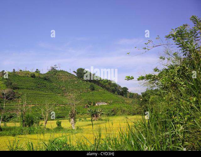Satellite Crop Monitoring System India Arable Farmdigital