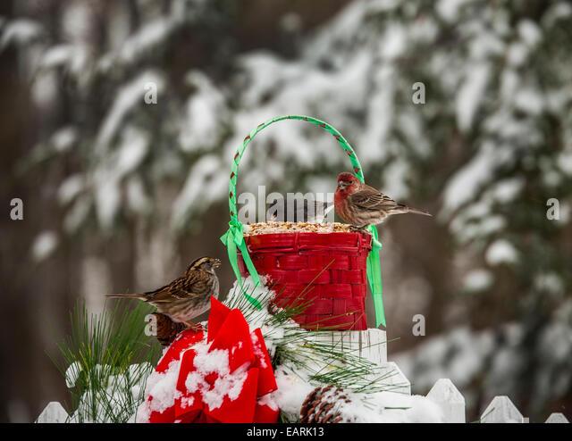 Bird feeder snow stock photos