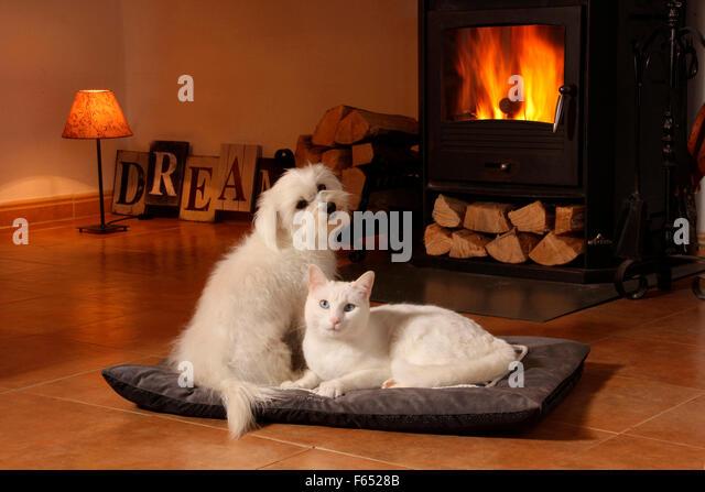 Cat Indoors Warm Stock Photos & Cat Indoors Warm Stock Images - Alamy