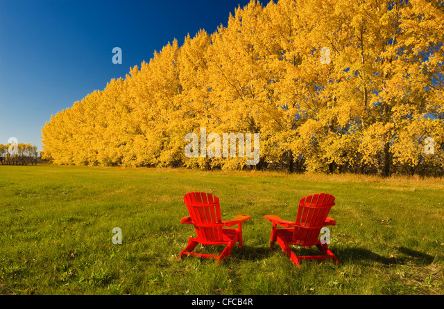 Two Chairs At The Edge Of A Hay Field With A Shelterbelt In Autumn Colours  In