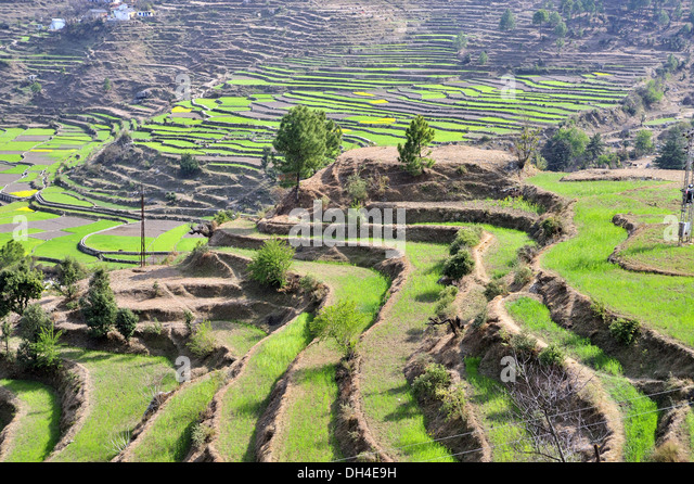 Terrace farming at kausani bageshwar uttarakhand india for Terrace 6 indore