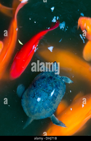 Fengshui stock photos fengshui stock images alamy for Koi fish wind chime