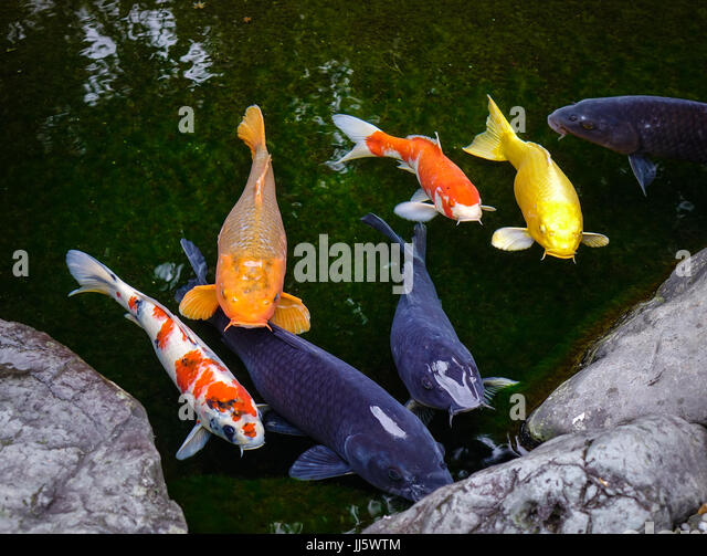 Comes from the word stock photos comes from the word for Carp meaning