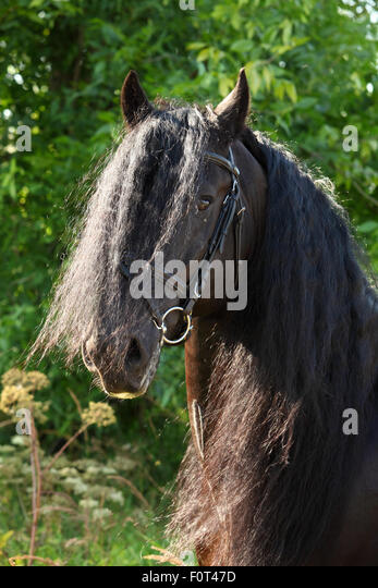 long manes stock photos - photo #28