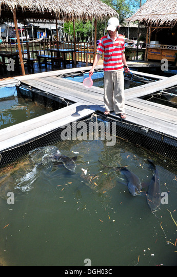 aquaculture in thailand By: carson chambers and alexa ferdig fringed with rich aquatic biodiversity both along shores and inland fresh waterways, thailand's marine life plays an integral role in thai society.